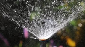 Sprinkler head watering in garden.