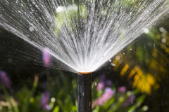 Sprinkler head watering in garden. Stock Photo