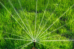 Sprinkler Irrigated Royalty Free Stock Photo