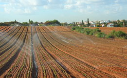 Sprinkler irrigated newly planted field. Crops growing on fertile farm land in Israel Royalty Free Stock Images