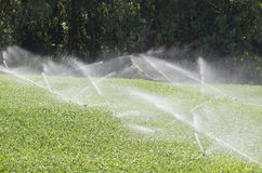 Sprinkler irrigation Royalty Free Stock Images