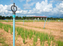 Sprinkler irrigation for agriculture field in developing country Royalty Free Stock Photography