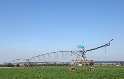 Sprinkler irrigation in field for watering Stock Image