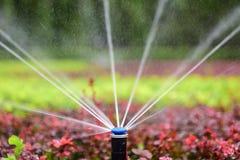 Sprinkler irrigation Royalty Free Stock Images