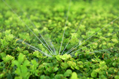 Sprinkler irrigation Royalty Free Stock Image