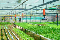 Sprinkler irrigation in hydroponics vegetable farm Stock Photos
