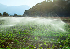 Sprinkler irrigation Royalty Free Stock Photos