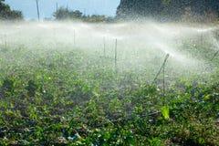 Sprinkler irrigation Royalty Free Stock Photos
