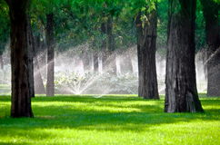 Sprinkler in a lawn with tree Stock Images