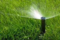 Free Sprinkler Of Automatic Watering Royalty Free Stock Images - 16241309