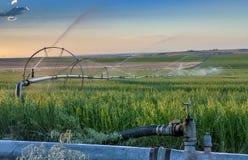 Sprinkler pipe irrigates farm land Stock Photo