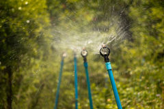 Sprinkler spin for plant Royalty Free Stock Photos