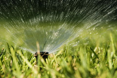 Sprinkler spraying water. Water splashing from a sprinkler hidden in the grass Stock Photography