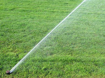Sprinkler spraying water on  grass Stock Image