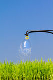 Sprinkler spraying water over young plant. On blue sky background Royalty Free Stock Images