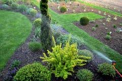 Sprinkler in spring garden. Irrigation sprinkler in spring beautiful garden Stock Photos