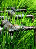 Sprinkler System. Copper pipes and valves in Montbretia stock photos