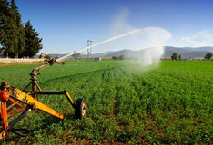 Sprinkler system. Crops being irrigated on a summer day Stock Photos