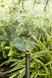Sprinkler System. Irrigation System watering plants in a flower bed Royalty Free Stock Photo