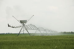 Sprinkler system crops Royalty Free Stock Images
