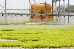 Sprinkler system in greenhouse hall with seedlings. Sprinkler system in greenhouse hall with young green seedlings being grown. Agriculture industry, fresh Stock Images