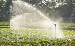 Sprinkler system Stock Photos