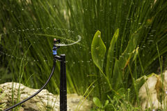 Sprinkler system spraying water garden Royalty Free Stock Image