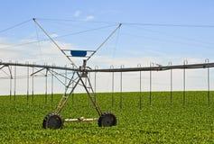 Sprinkler system to irrigate the cornfield Stock Photos