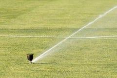 Free Sprinkler System Working On Fresh Green Grass On Football (soccer) Stadium Stock Photography - 60253662