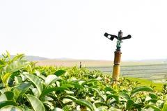 Sprinkler on Tea Plantation. Stock Photos