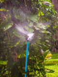 The sprinkler. Water from sprinkler in garden Stock Photos