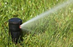 Sprinkler watering Stock Image