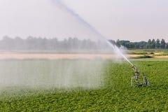 A sprinkler is watering farmland royalty free stock photos