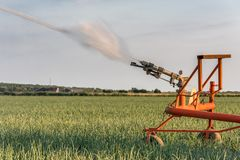 A sprinkler is watering a field with onions royalty free stock images