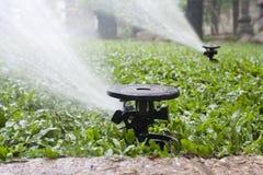 Sprinkler watering the grass Stock Image