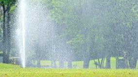 Sprinkler stock video footage