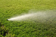 Sprinkler watering new lawn. Sprinkler system working on fresh green grass Stock Image
