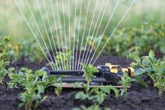Sprinkler watering potatoes in garden Stock Photography