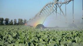 Sprinkler waters a field stock video