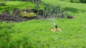Sprinkler woman hose Stock Photography