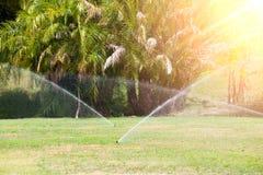 Sprinkleranläggning som bevattnar gräsmattan swallowtail för sommar för fjärilsdaggräs solig Fotografering för Bildbyråer