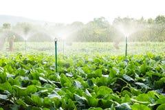 Sprinklerbevattning royaltyfri foto