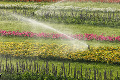 sprinklers Royaltyfri Fotografi