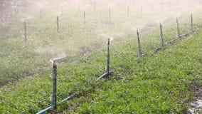 Sprinklers on field stock footage