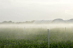 Sprinklers Irrigating. Water Sprinklers irrigating plants on overcast day stock photography