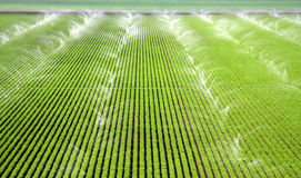 Sprinklers irrigating a Farm Field Stock Photos