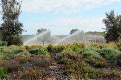 Sprinklers watering garden with water spray Royalty Free Stock Photos