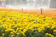 Free Sprinklers Watering The Flowers Royalty Free Stock Photography - 24978237