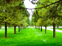 Sprinklers watering in Tiantan Park. A lawn irrigating machine watering the lawn with pine and cypress background inside Tiantan Park Beijing China Stock Photos