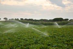 sprinklersvatten Arkivfoton